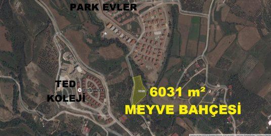 BALLIÖZDE SATILIK 6031 m² MEYVE BAHÇESİ